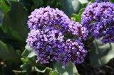 23_purpleplants